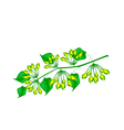 Fresh Cowslip Creeper Flower on White Background vector image vector image