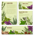 garden herb and spice seasoning banner template vector image vector image