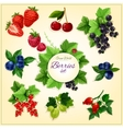 Berry and fruit cartoon poster for food design vector image vector image