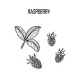 berry hand drawn collection raspberry vector image