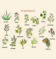 best medicinal herbs for hair care hand vector image vector image