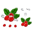 Cartoon red berries of coffee with leaves vector image