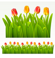 herbaceous border vector image