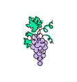 line icon grape one line colored drawing vector image vector image