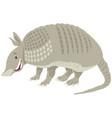 armadillo animal cartoon vector image