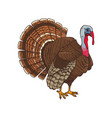 bird turkey symbol of thanksgiving day vector image