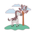 zebra cartoon in forest next to the trees in vector image vector image