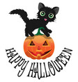 black cat and pumpkin for halloween2 vector image vector image