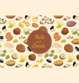 flyer with nuts and seeds vector image
