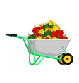 wheelbarrow and pepper vegetables in garden vector image vector image