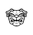 head dog breed bulldog vector image vector image
