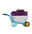 wheelbarrow and eggplant vegetables in garden vector image