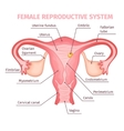 Female Reproductive System Scientific Template vector image vector image