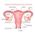 Female Reproductive System Scientific Template