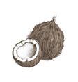 hand drawn coconut with half vector image vector image