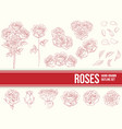 hand drawn flower roses outline ornament sketch le vector image