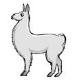 lama animal from south america vector image vector image