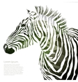 Animal of military zebra vector image vector image