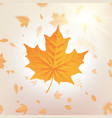 autumn falling leaves template for placards vector image
