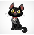 Black kitten in collar with pendant-skull