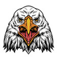 colorful angry eagle head template vector image vector image