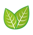 leaf plant nature isolated icon vector image vector image