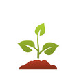 seedling icon growing tree green agriculture vector image vector image