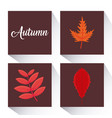 autumn season design vector image vector image