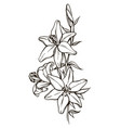 lily flowers black and white vector image vector image