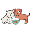 little dogs adorable with fish in aquarium vector image