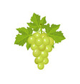 fresh bunch of grapes vector image vector image