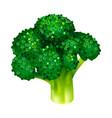 garden broccoli icon isometric style vector image