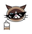 grumpy cat making gesture with middle finger vector image vector image