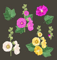 malva flowers and leaves set summer floral design vector image