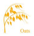 Oat cereals vector image vector image