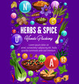 vitamins in spices seasonings and organic herbs vector image vector image