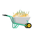 wheelbarrow and onion vegetables in garden vector image