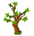 a deciduous tree with green leaves isolated on vector image