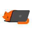 cat and laptop home pet and keyboard does not work vector image vector image