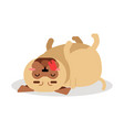 funny pug dog character lying on its back vector image vector image