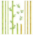 bamboo stems design natural green oriental vector image