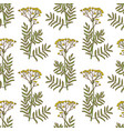 colored tansy pattern in hand drawn style vector image vector image