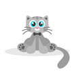 cute grey cat isolated on white vector image vector image