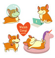 cute welsh corgi set in different poses funny vector image vector image