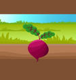 round beetroot template colorful vector image