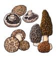 Set of portobello morel and shiitake edible vector image