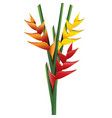 heliconia flower bouquet vector image