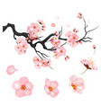 blossom cherry flowers on branch japanese vector image vector image