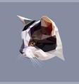 low poly design polygonal color cat vector image