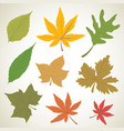 set of colorful autumn leaves nature vector image vector image